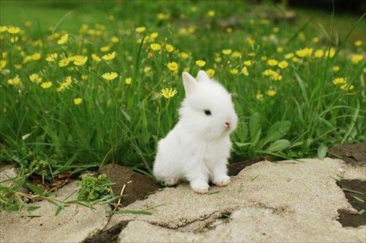 かわいいウサギ33