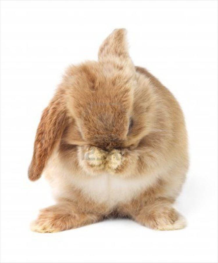 かわいいウサギ34