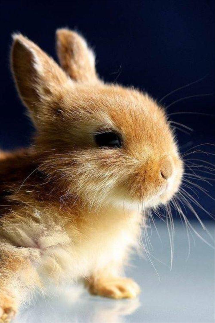かわいいウサギ56