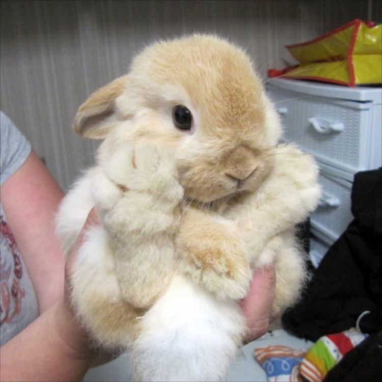 かわいいウサギ59