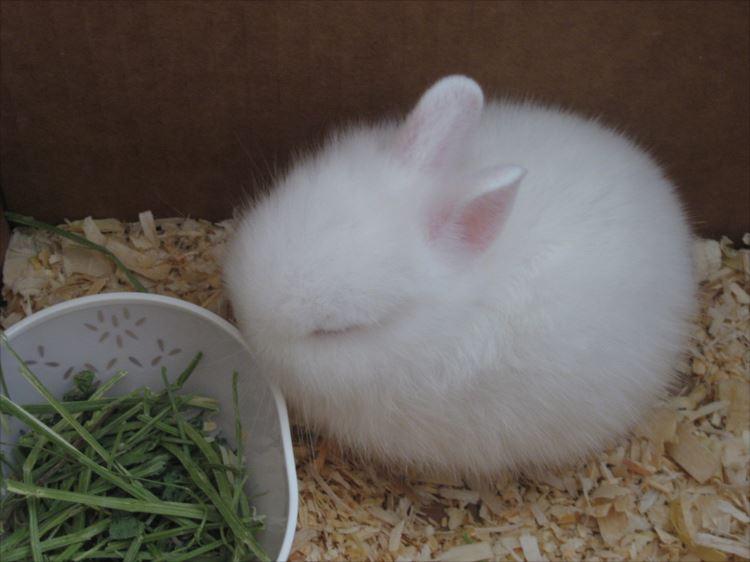 かわいいウサギ60