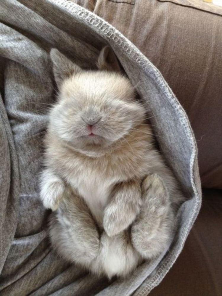かわいいウサギ61