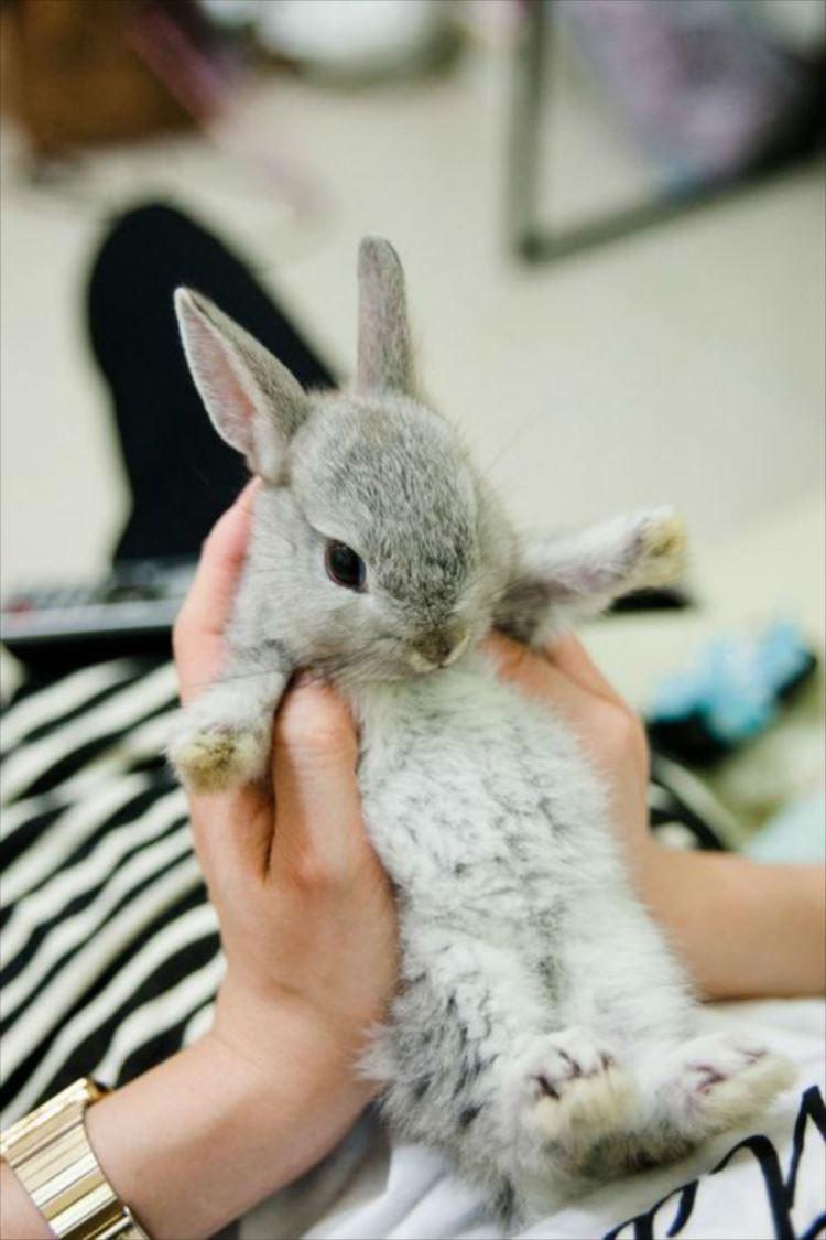 かわいいウサギ64