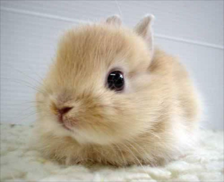 かわいいウサギ66