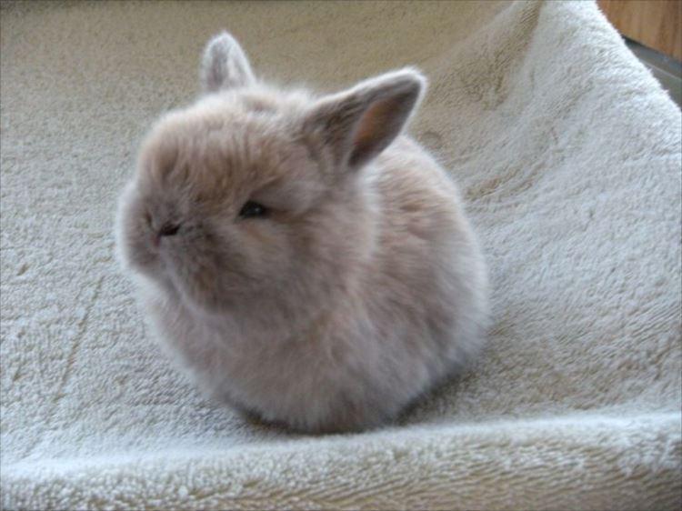 かわいいウサギ67