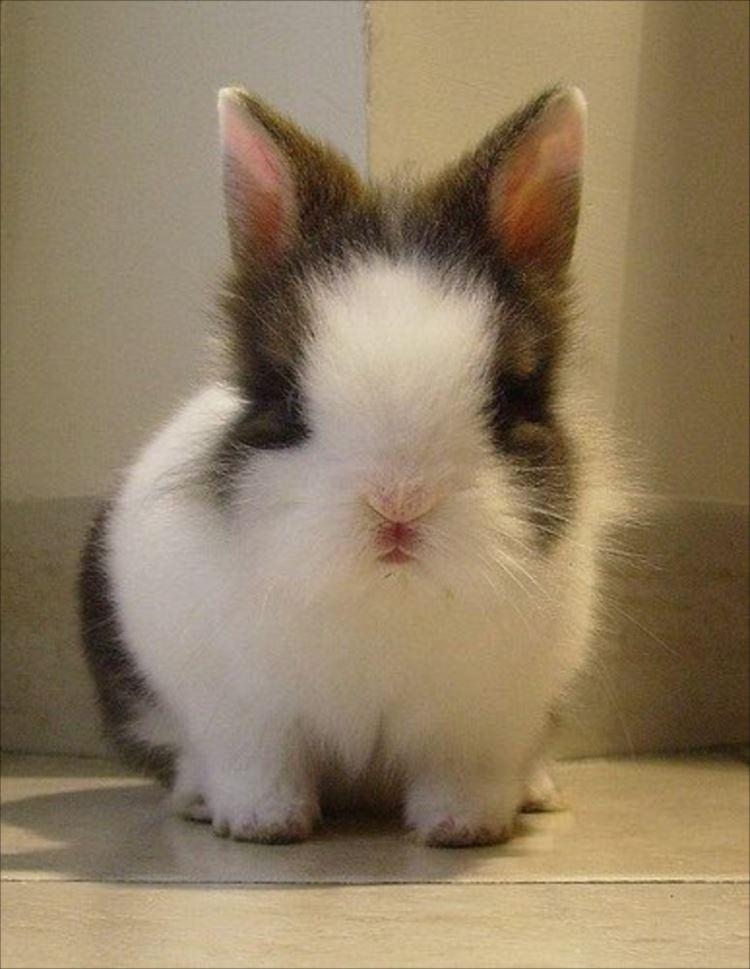 かわいいウサギ71