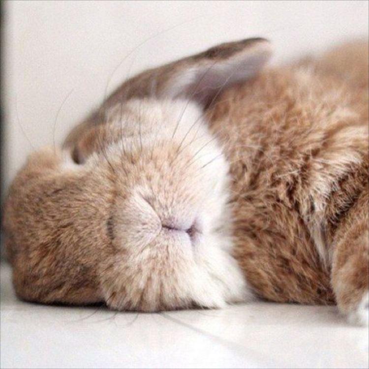 かわいいウサギ72