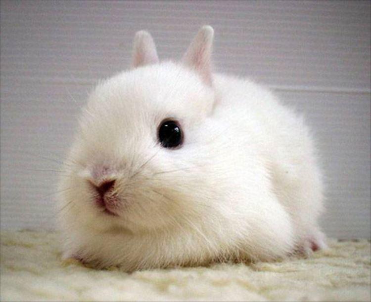 かわいいウサギ73