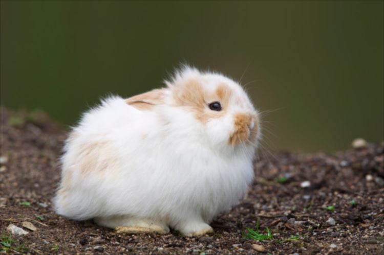 かわいいウサギ74