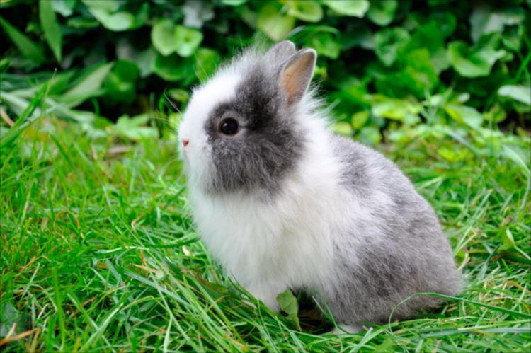 かわいいウサギ77