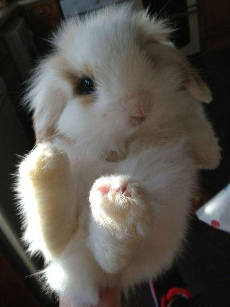 かわいいウサギ80