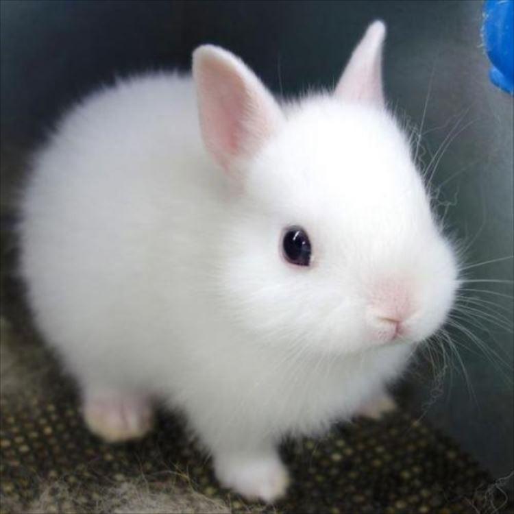 かわいいウサギ83