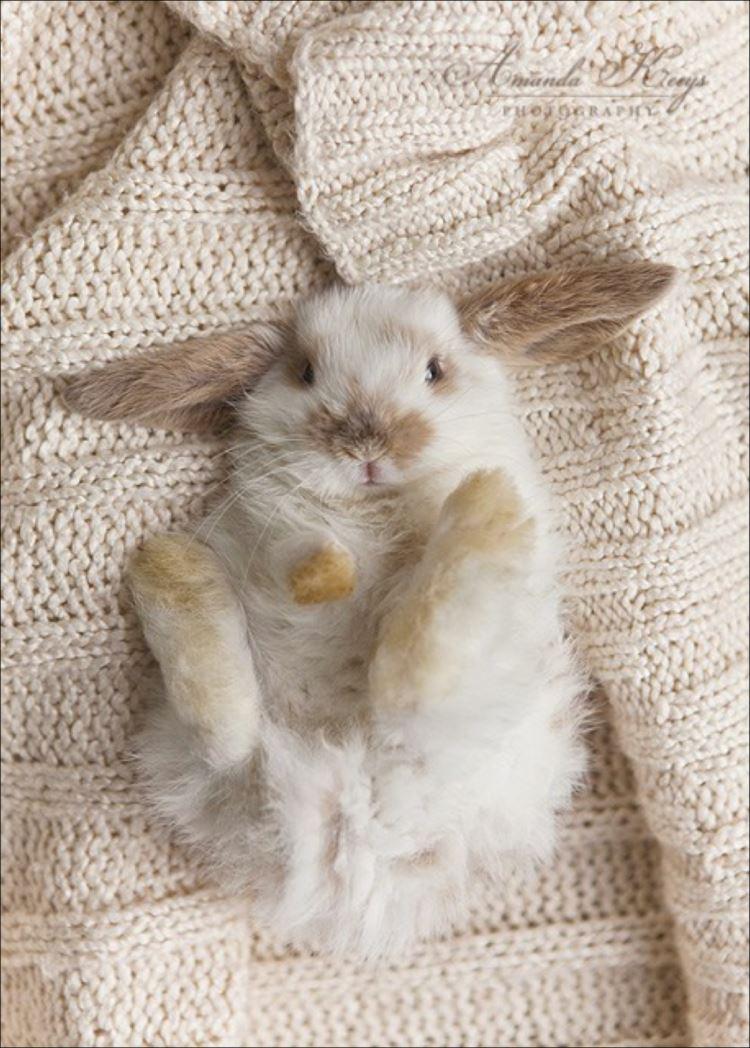 かわいいウサギ84