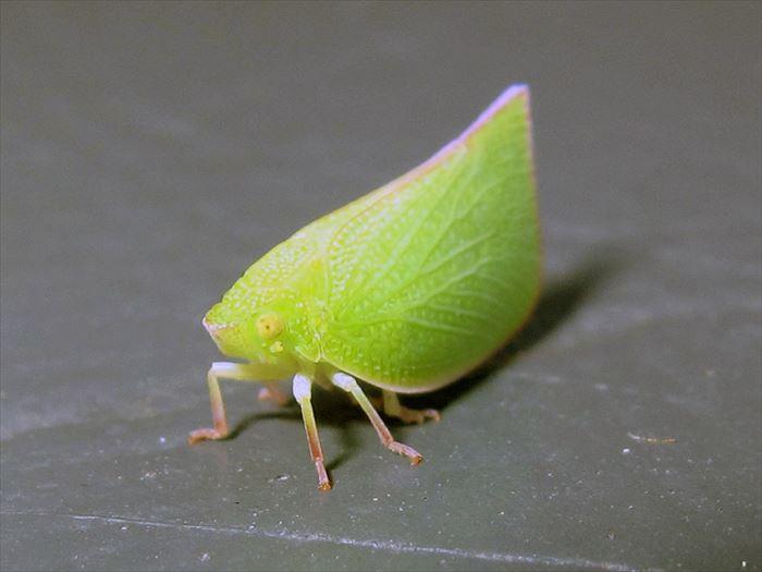キモイ可愛い虫13