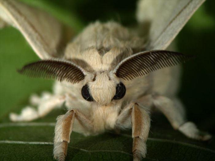 キモイ可愛い虫18