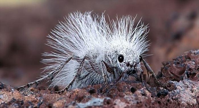 キモイ可愛い虫19