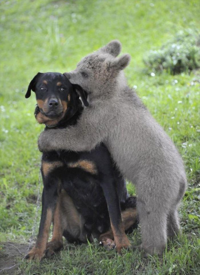 可愛い動物11