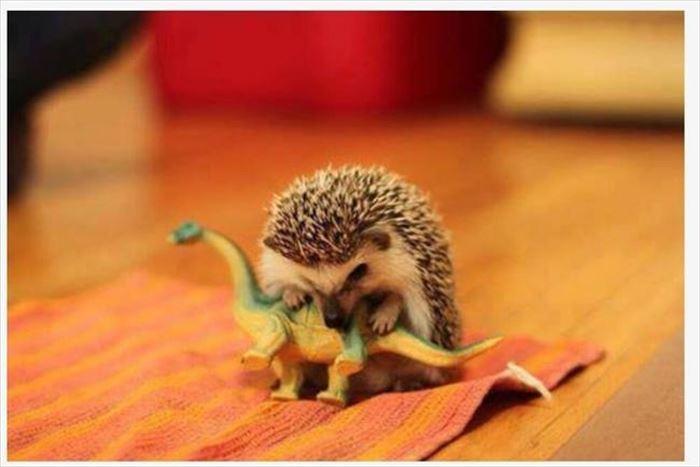 可愛い動物4