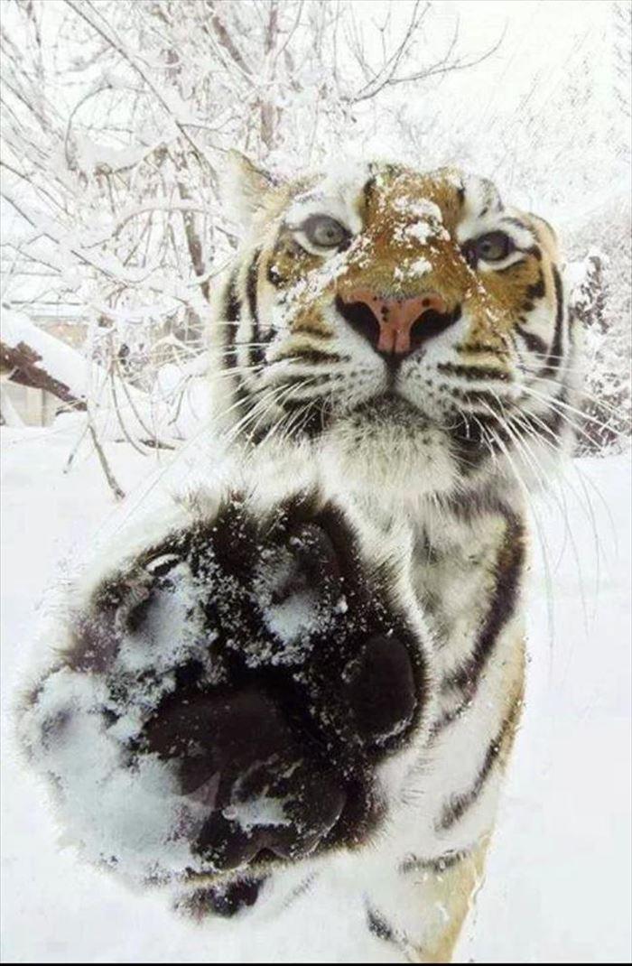 可愛い動物9