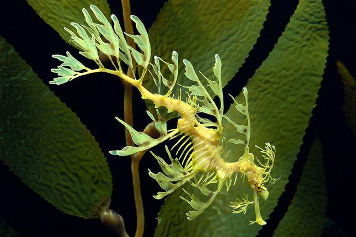 深海生物 10