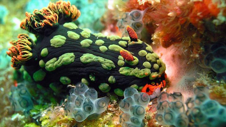 深海生物 23