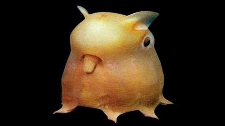 深海生物 34