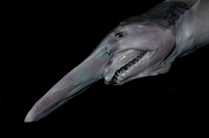 深海生物 4