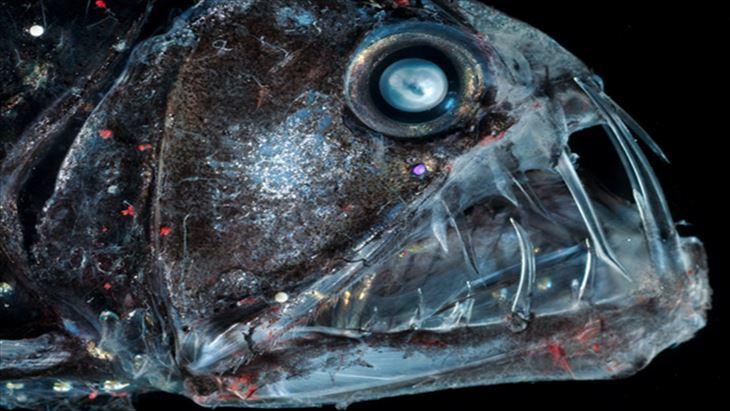 がいこつな深海生物