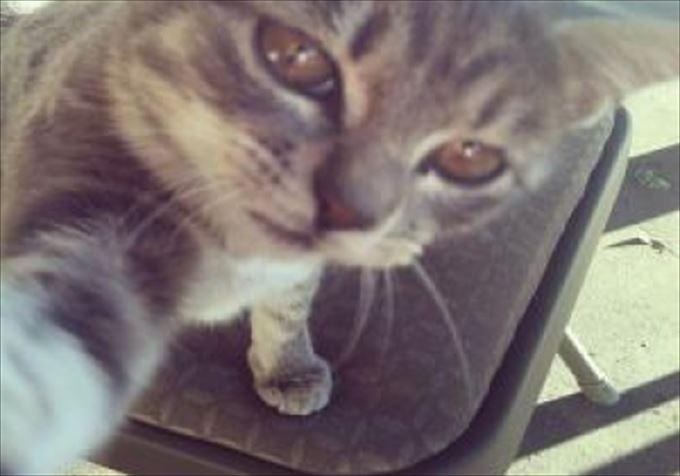 かわいいネコの自撮り1