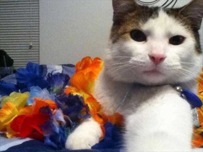 かわいいネコの自撮り12
