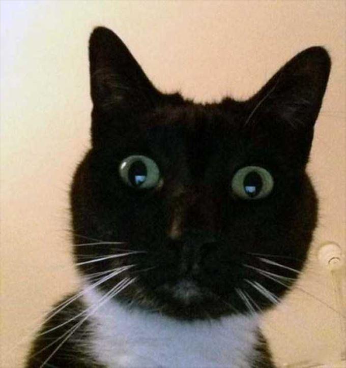 かわいいネコの自撮り17