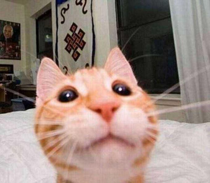 かわいいネコの自撮り21