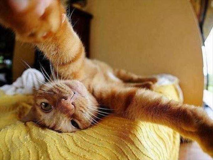 かわいいネコの自撮り24