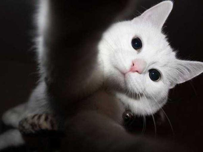 かわいいネコの自撮り29