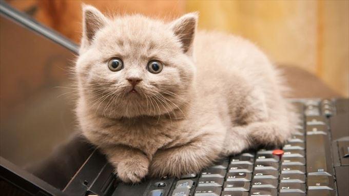 かわいいネコの自撮り3