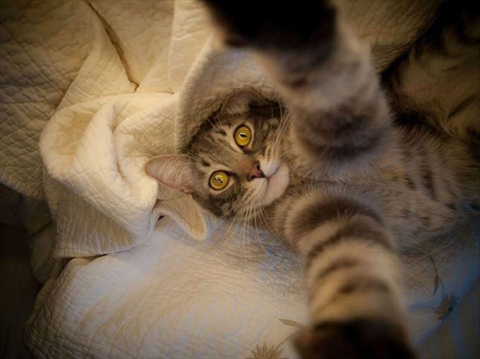 かわいいネコの自撮り4