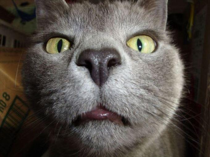 かわいいネコの自撮り7
