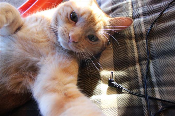 かわいいネコの自撮り8