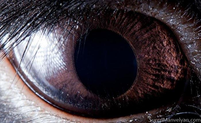 動物の目 11
