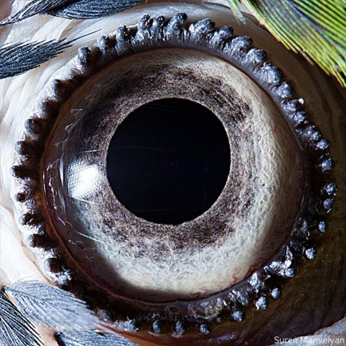 動物の目 12