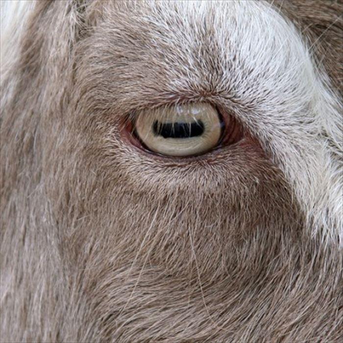動物の目 16