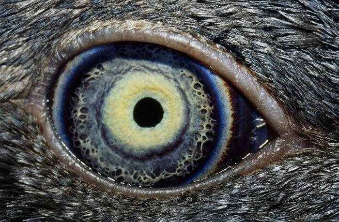 動物の目 18
