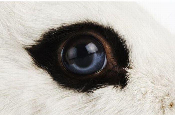 動物の目 22