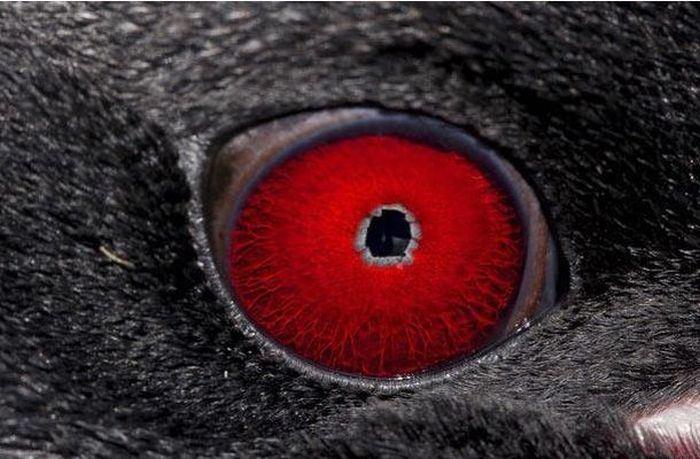 動物の目 23