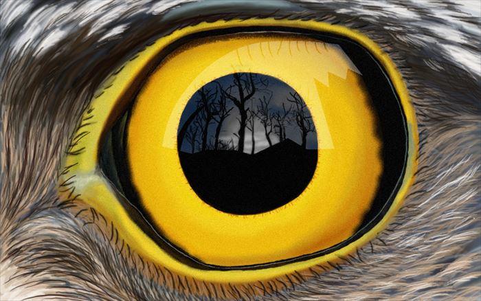 動物の目 24