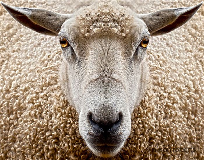 動物の目 25