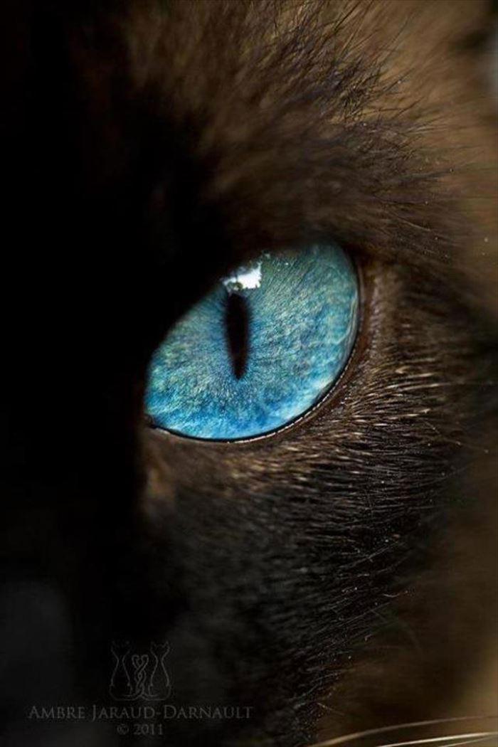 動物の目 28