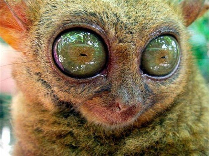 動物の目 34