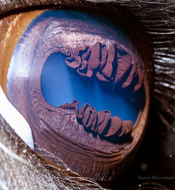 動物の目 4