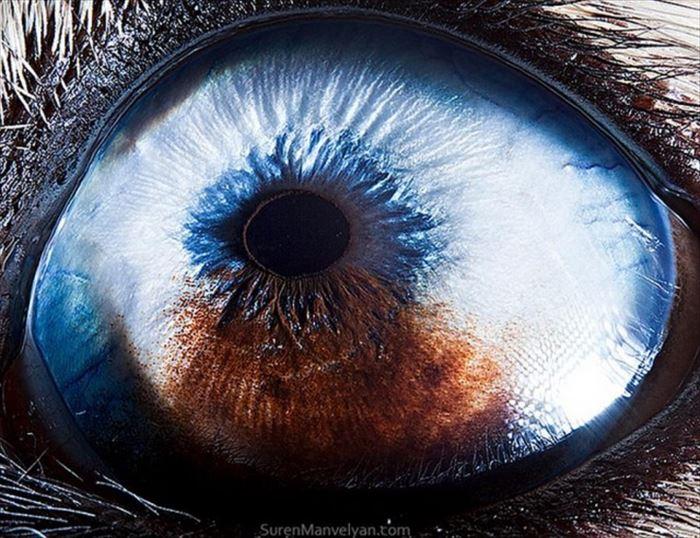 動物の目 7